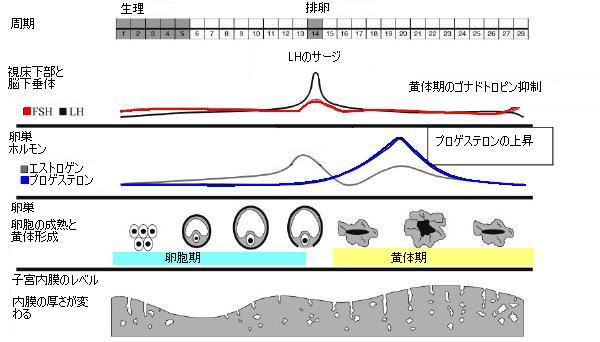 [normal cycle.jpg]